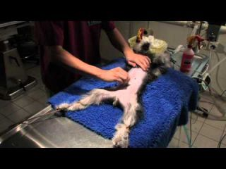 Veterinary surgery tutorial (Part 1/5)