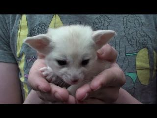 Cute Exotic Animal Baby Compilation 2013 [HD]