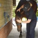 Equine Shiatsu